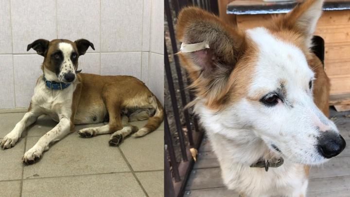 «Очередь расписана до ноября»: в Ростове открыли центр стерилизации бездомных собак