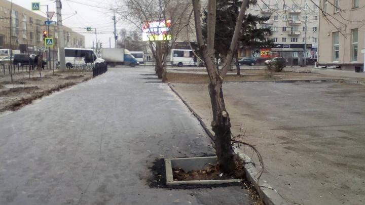 Мэр Фадина заявила, что сотрудника управления дорожного хозяйства уволили из-за загубленных деревьев
