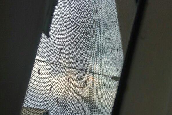 Комары на ОбьГЭСе