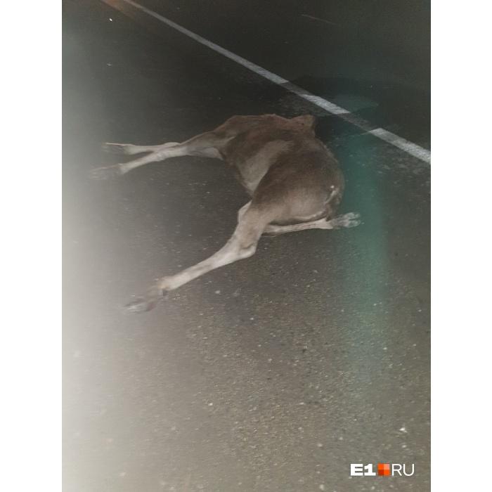 Животное погибло