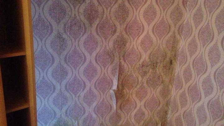 Плесень на стенах и голуби в вентиляции: уфимцы рассказали, как живут в аварийном доме