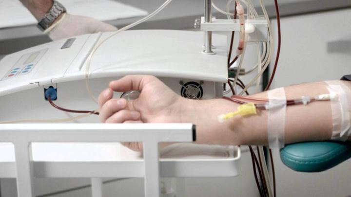 Чистая кровь — фундамент здоровья