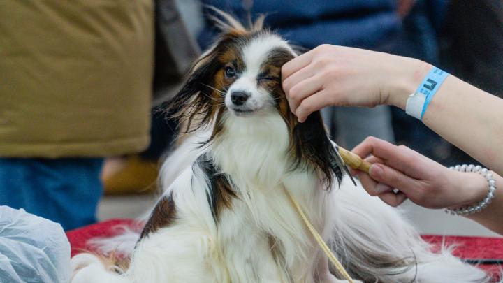 «Сказка» Гии Эрадзе, «Хищные птицы» и 150 пород собак: афиша первой февральской недели в Перми