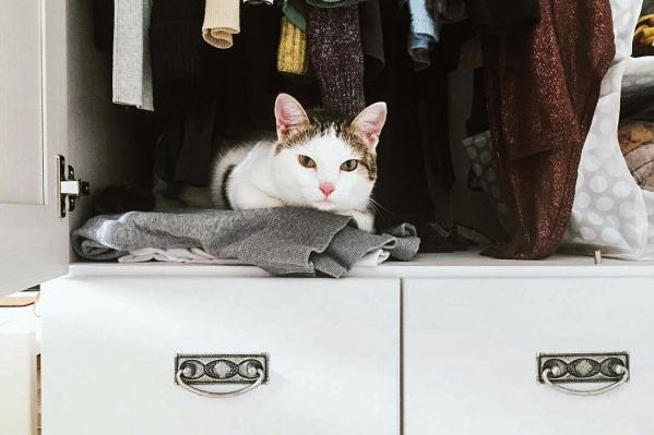 Теплую тряпку для кота еще можно оставить, но остальное...