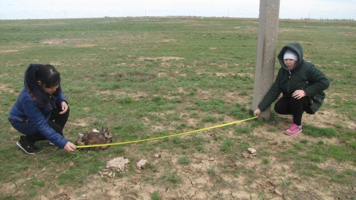 В Волгоградской области убило током краснокнижного орла