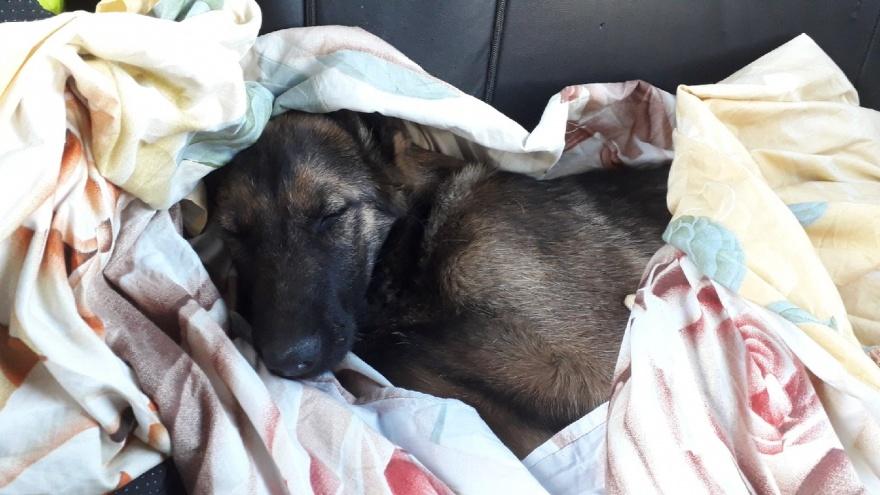 В Ярославской области две девушки и два полицейских спасли умирающую на дороге собаку