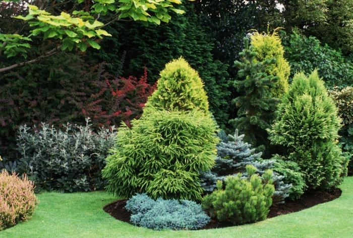 Ландшафтные дизайнеры назвали самый благоприятный период посадки хвойных саженцев в саду