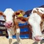 Пейте, дети, молоко: в Уфе пройдет всероссийский фестиваль «Молочная страна — 2018»