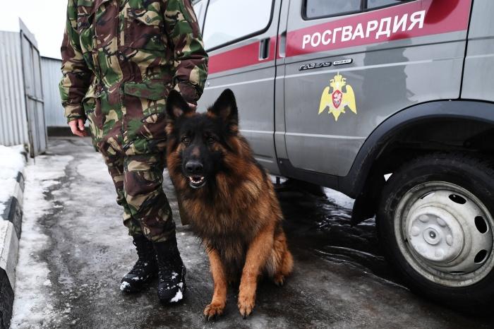 Новосибирских гвардейцев ждёт командировка на матчи в Самаре, Саранске и Казани