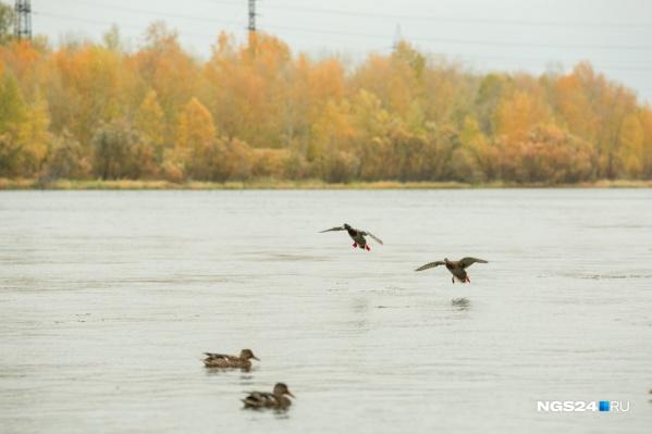 Сегодня в Красноярске ожидают до 21 градуса тепла