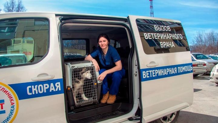 В Новосибирске появилась скорая помощь для котов, собак и лошадей