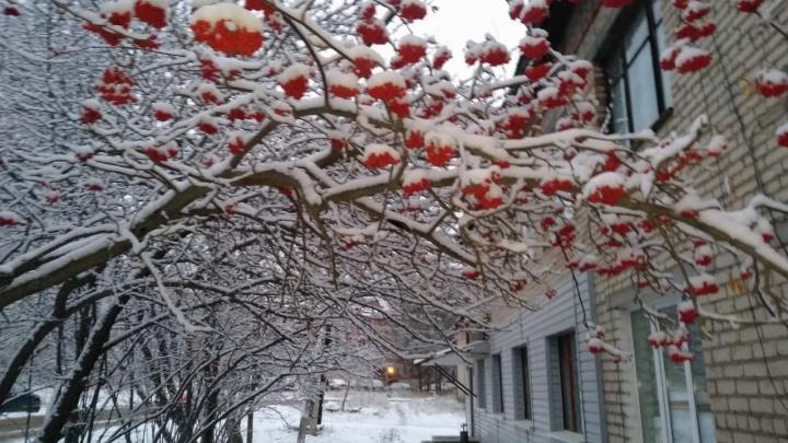 Белый понедельник: екатеринбуржцы сфотографировали присыпанные снегом улицы