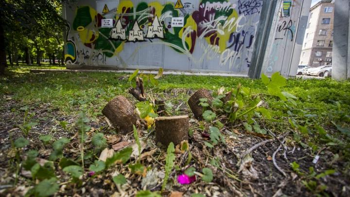 В Первомайском сквере вырубили деревья ради «социально значимого» туалета