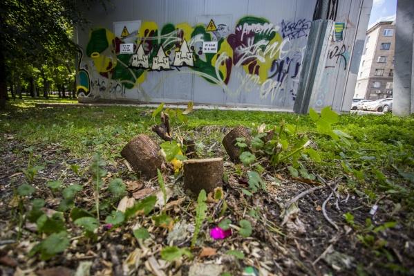 Недалеко от ресторана «Перчини» спилили деревья — в мэрии пояснили, что они были аварийными