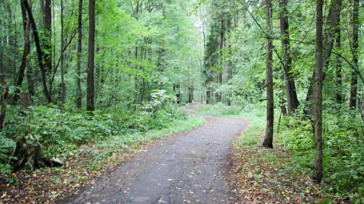 В Черняевском лесу появится новая экологическая тропа Terra Oecologia