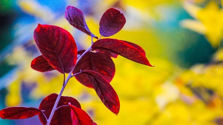 Золотая осень пришла на набережную Волгограда