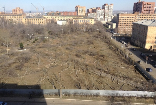 В крае резко завысили объём вырубки деревьев под бизнес-проекты