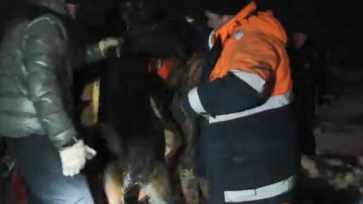 Хитрость удалась: уфимские спасатели достали из воды провалившуюся под лед лошадь