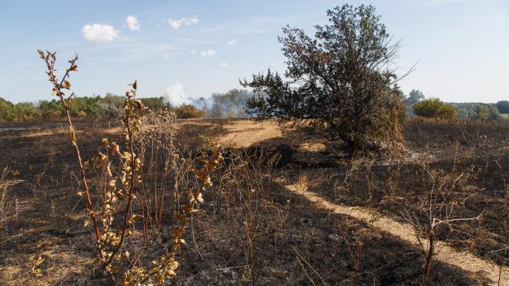 В Волгоградской области тушат горящую степь