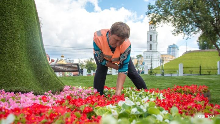 К фестивалю цветов в Струковском саду высадят около 1000 растений