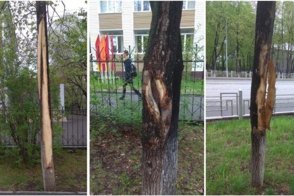 Деревья получили серьезные повреждения. Кто сделал?