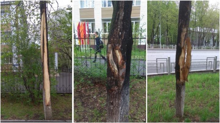 «Бессмысленное варварство»: на Московском тракте неизвестные повредили деревья у школы