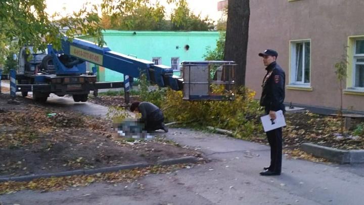 Дерево насмерть придавило женщину на Планировочной