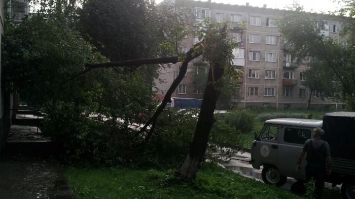 На Северо-Чемском рухнувшее дерево закрыло вход в пятиэтажку (фото)