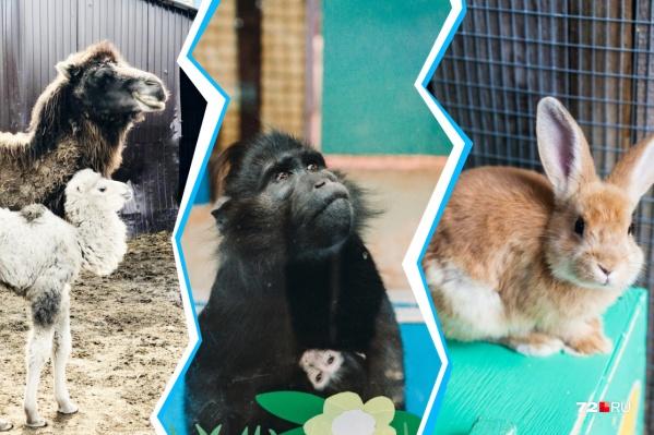 В зоопарках будут рады любым дарам с ваших садов и огородов. Главное— чтобы ягоды, фрукты, овощи и зелень были неиспорченные