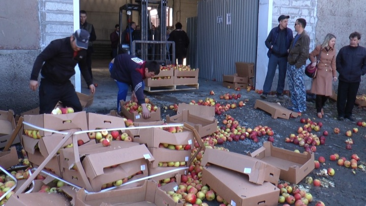Полтора миллиона рублей смяли гусеницами: под Екатеринбургом раздавили 20 тонн санкционных яблок