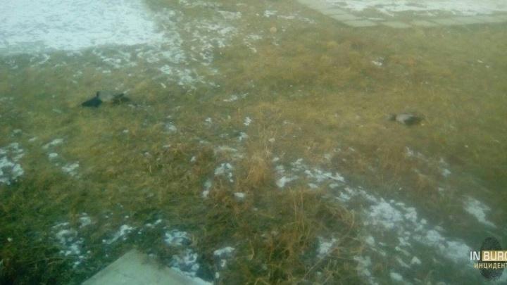 На Сортировке расстреляли ворон, разгуливавших по детской площадке