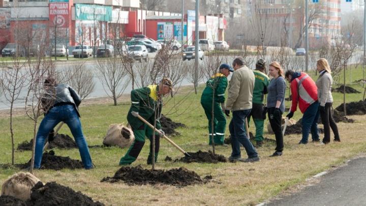 Челябинск включился в гонку за девять тысяч бесплатных деревьев для города