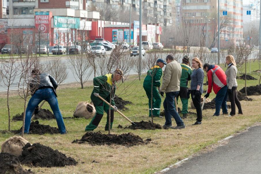 Аллеи с бесплатными деревьями могут появиться возле школ, институтов, больниц, в парках и дворах