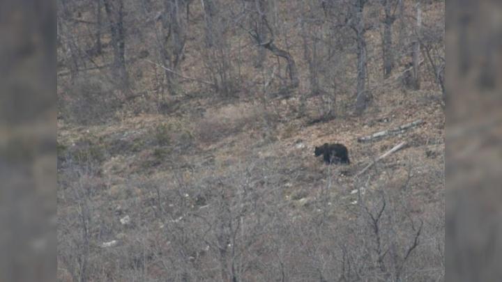 В Башкирии медведь попался в фотоловушку