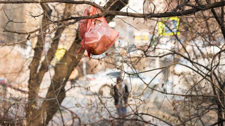 Мусорная полиция: знакомим с необычными украшениями на ростовских деревьях и новым типом мошенников