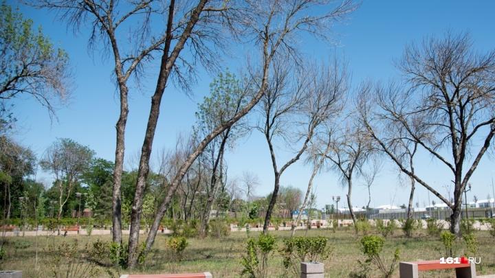 Чиновники посчитали деревья, погибшие рядом с «Ростов Ареной»