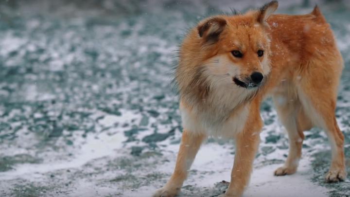 Одиночество и красота: новосибирец снял живописный ролик с мрачным морем Сахалина