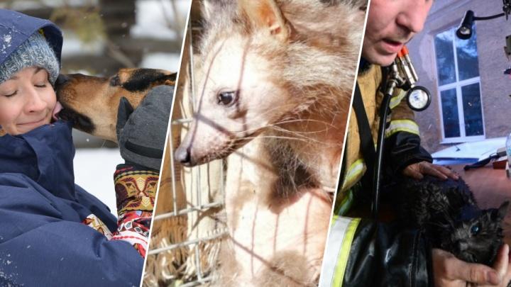 Чудеса спасения: 8 историй животных, которые нас умилили и растрогали в 2019 году