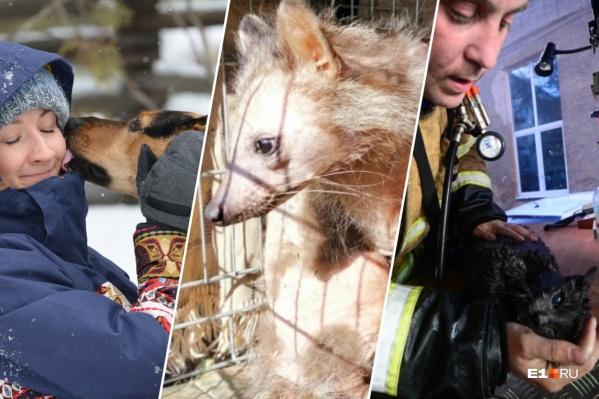 Спасенная собака, лысый енот и кот, которому сделал искусственное дыхание пожарный