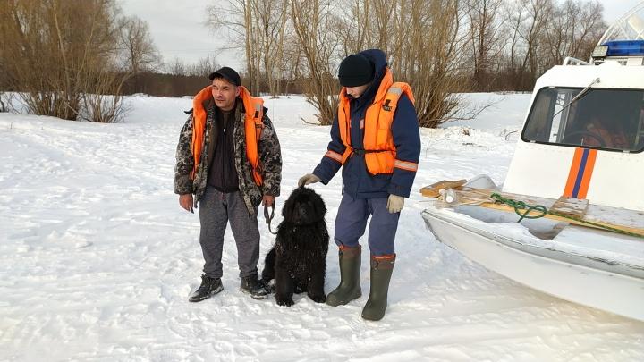 Собаку, застрявшую на острове посреди реки, спасли — вопреки её желанию (и это попало на видео)