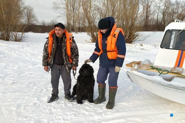Спасатели смогли найти животное и доставить на берег