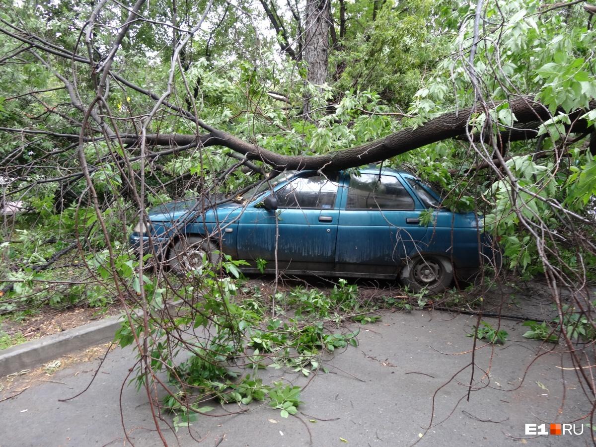 Старое дерево упало на крышу ВАЗа