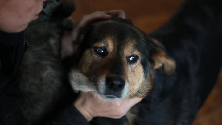 Общественники взялись избавить город от бродячих собак сбором макулатуры