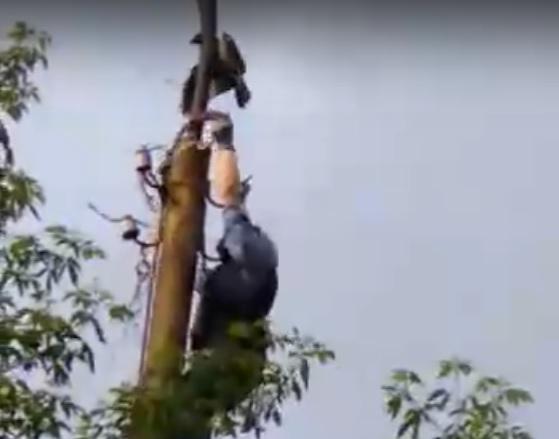Чтобы освободить птицу, Евгений забрался на столб