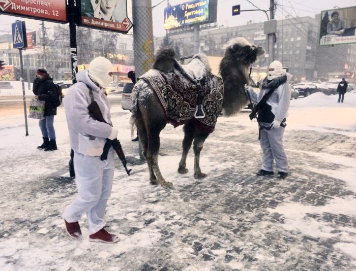 Верблюд попался на глаза новосибирцам утром недалеко от ЦУМа