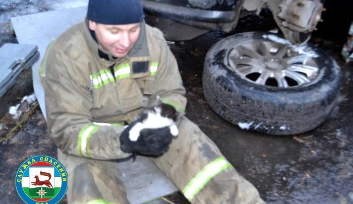 Уфимские спасатели вытащили котенка из-под капота машины