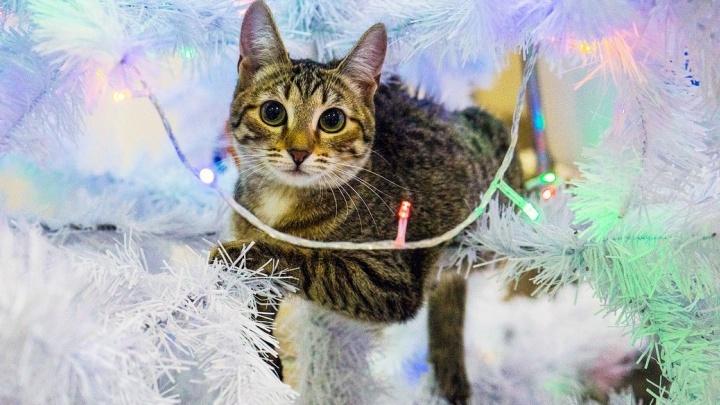 Как спасти ёлку от кота и намекнуть Деду Морозу на нужный подарок: решаем типичные новогодние проблемы