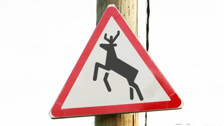 В Прикамье из-за участившихся ДТП с лосями установят дополнительные дорожные знаки «Дикие животные»