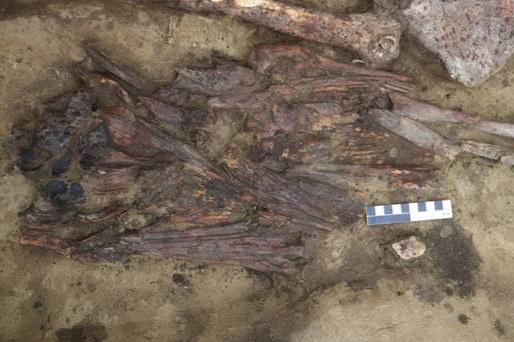 Под Новосибирском нашли загадочный предмет из клювов птиц — ученые не знают, для чего он нужен