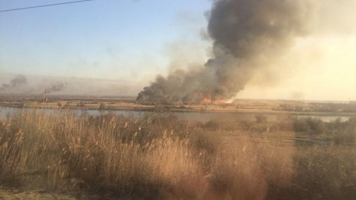 Небрежность отдыхающих: на Дону с начала года трава и сухой камыш горели 700 раз